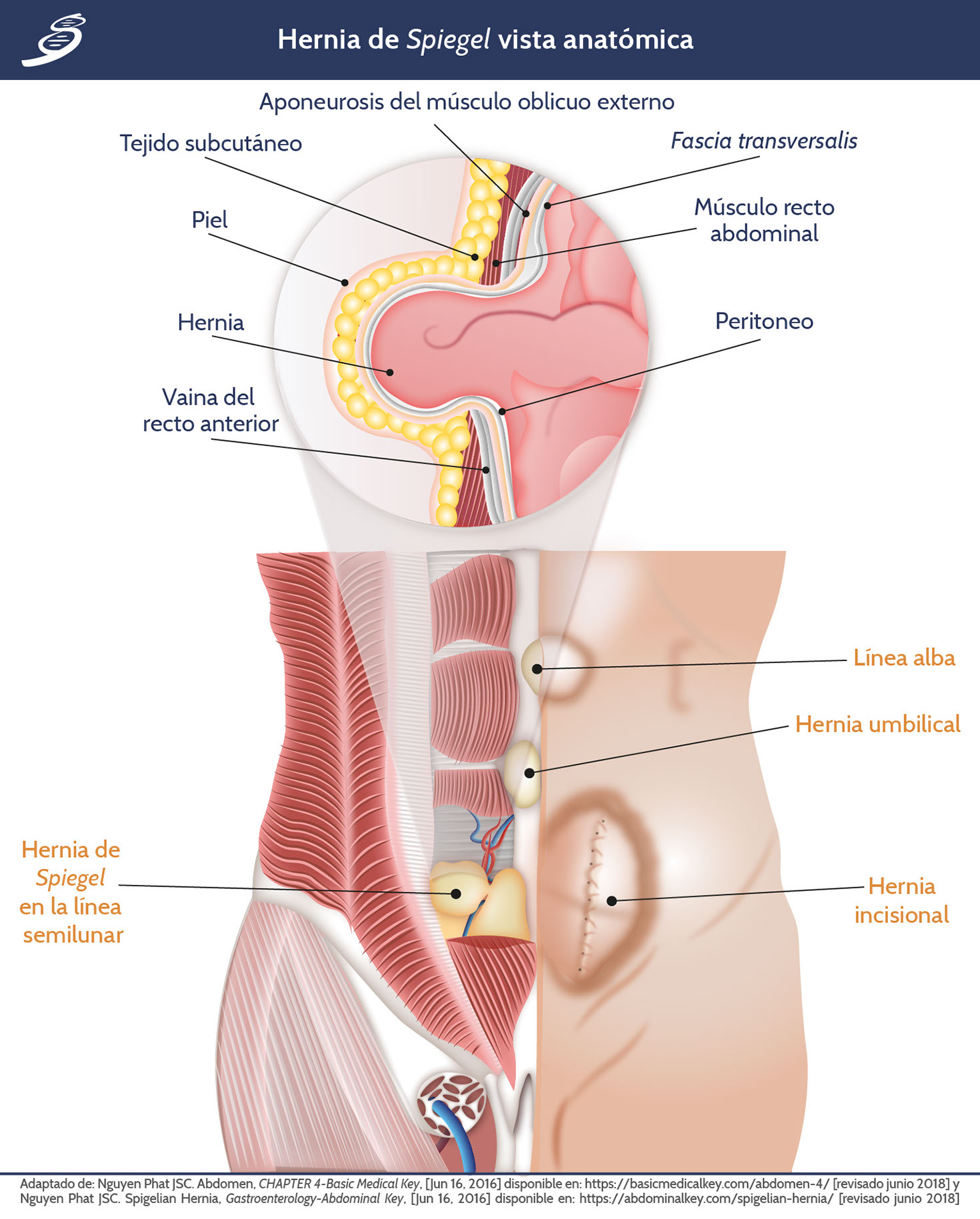HS_fisiopatologia